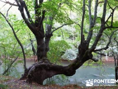 Cañones y nacimento del Ebro - Monte Hijedo;mapa pedriza;senderismo en la palma